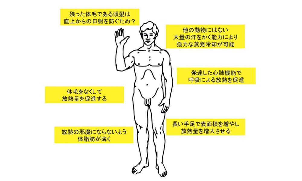 図2 人間の体は「放熱専用」にチューニングされている