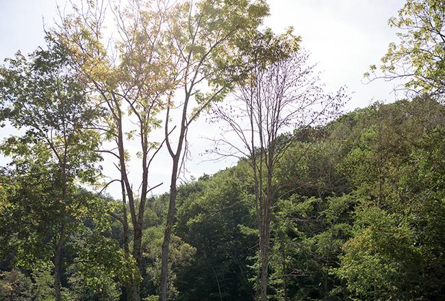 北海道恵庭市にある「北清の森」は、豊かな広葉樹の森