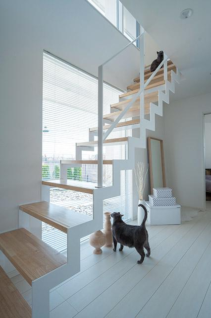 1階南面のフィックス窓と直線的な白い鉄骨階段は、猫たちが外の景色を楽しむのにうってつけの場所