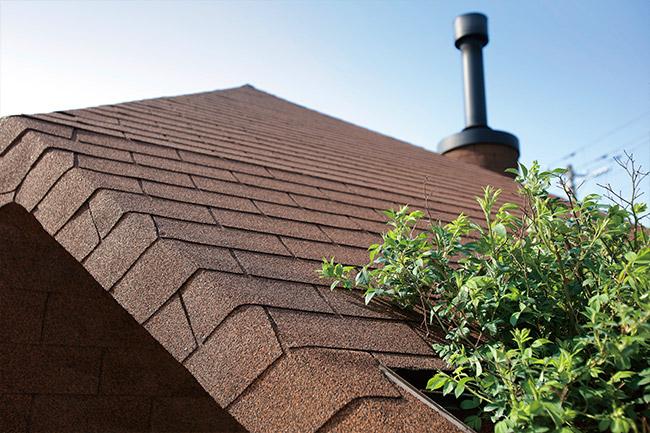 建物を包む茶色の外装が印象的。本来は屋根材だが外壁・軒天・トレリスのすべてに使用した