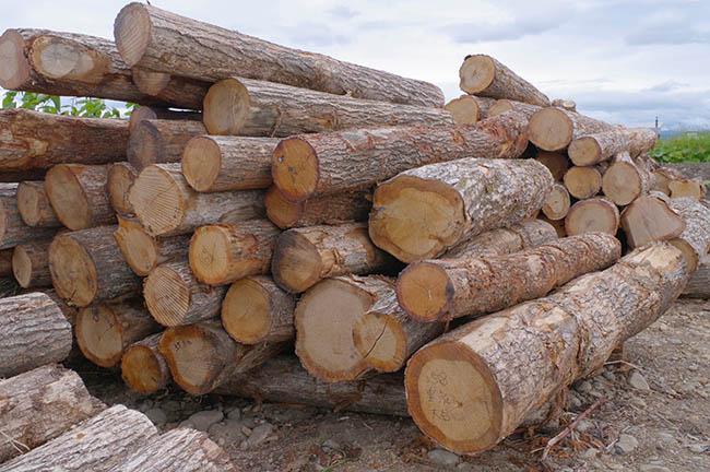 ここにあったのは、地域の山から切り出したたくさんの丸太。これが家具になっていくんだね