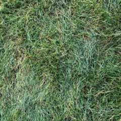 【庭DIY】「芝張り」初心者が、北海道は札幌で芝生を張ってみ…