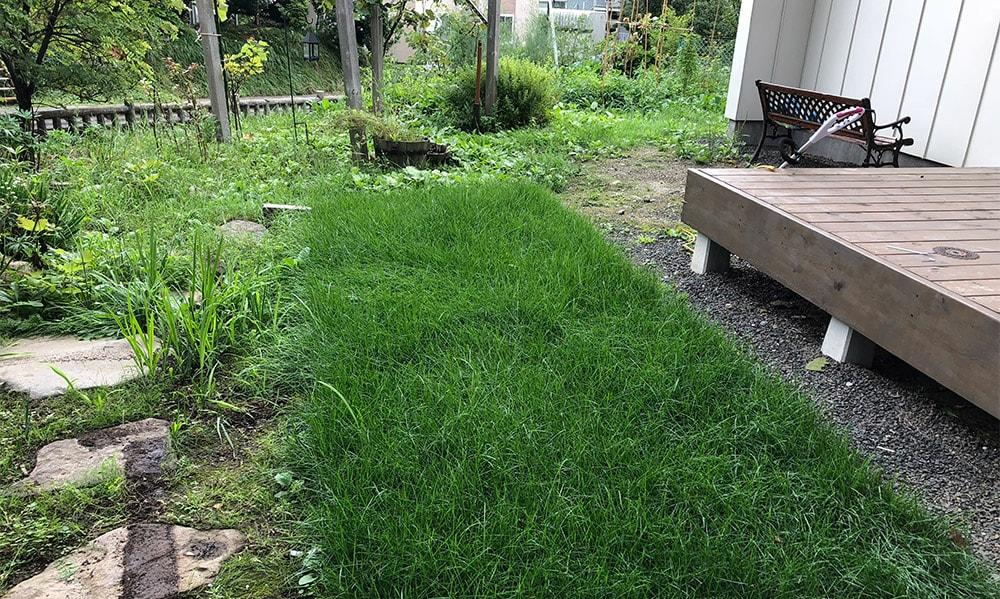 札幌で芝生を張ってみた