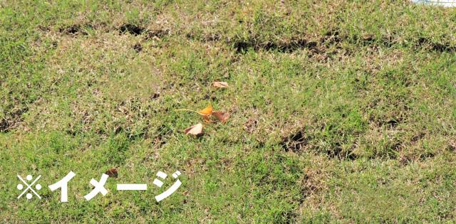 失敗した芝生のイメージ