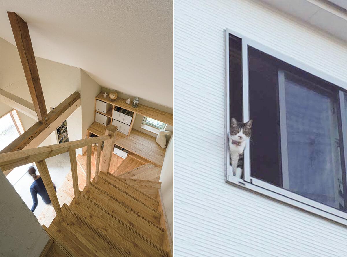 階段と窓から顔を出す猫