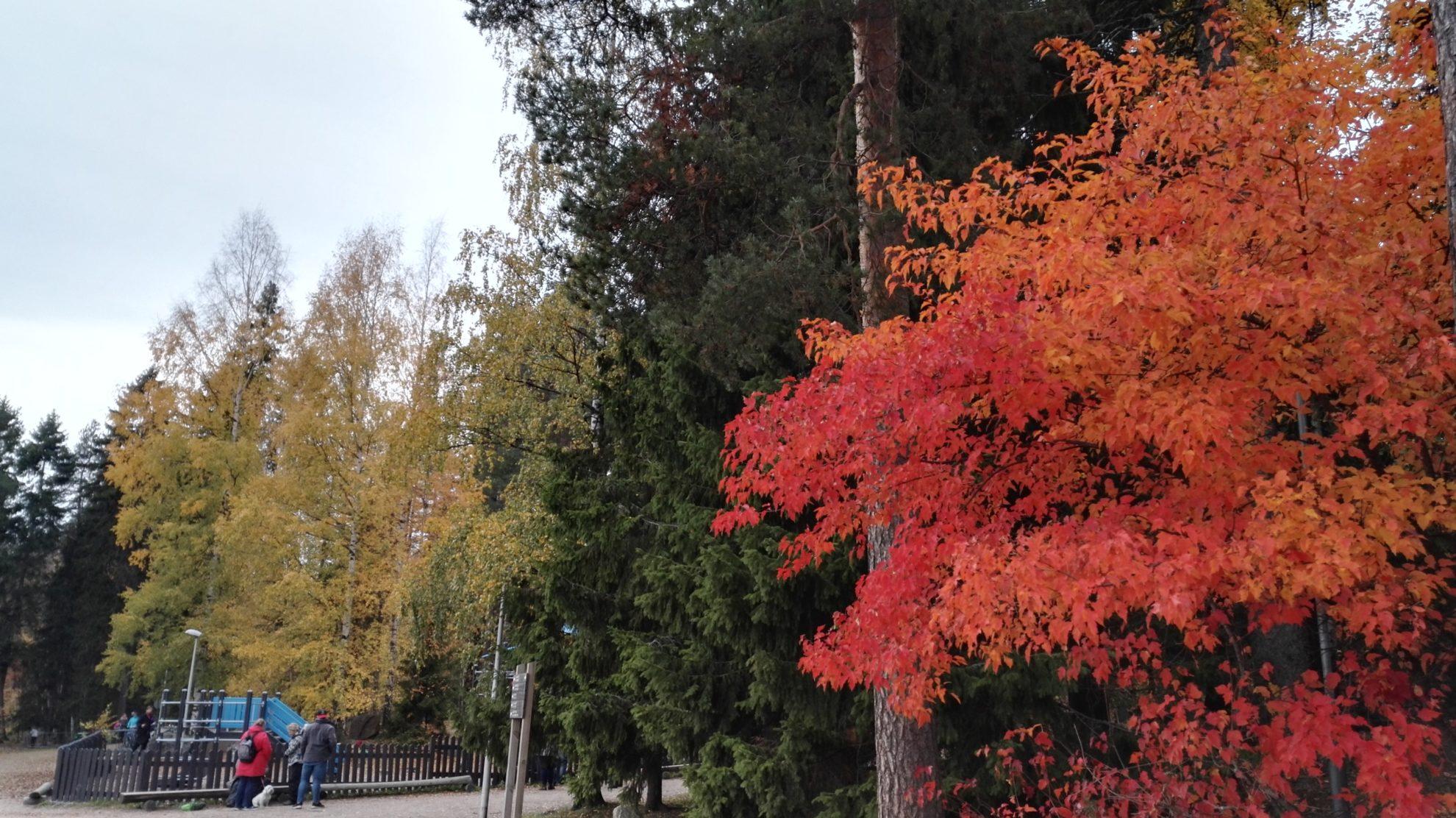 フィンランドの紅葉