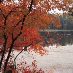 紅葉の湖畔でスモークサウナ、のちスイミング。