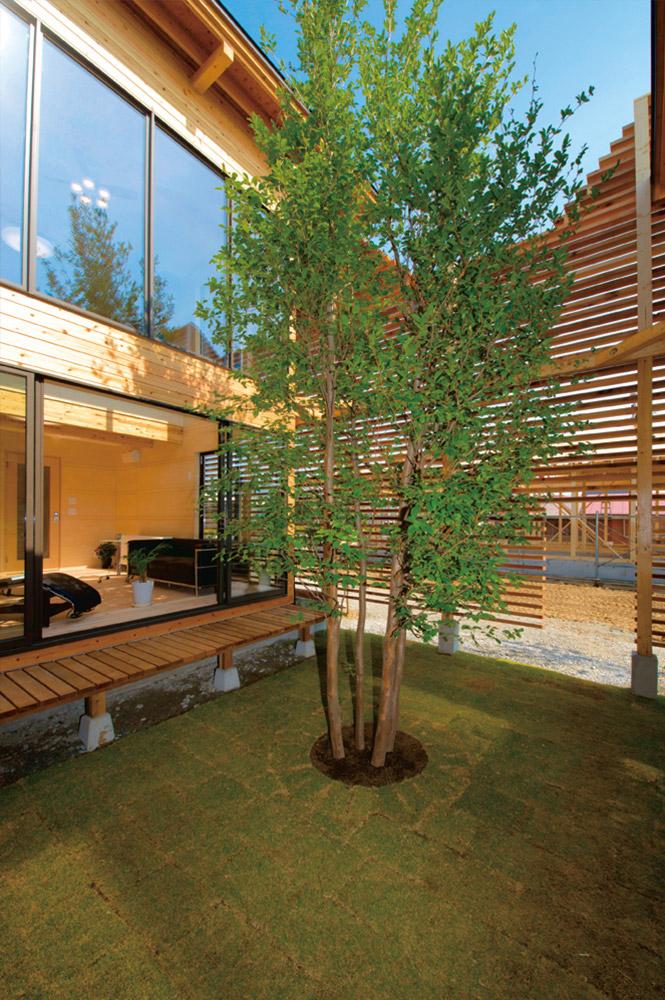 プライベート感の高い中庭。ルーバーによって視線は遮り、光と風は採り入れている