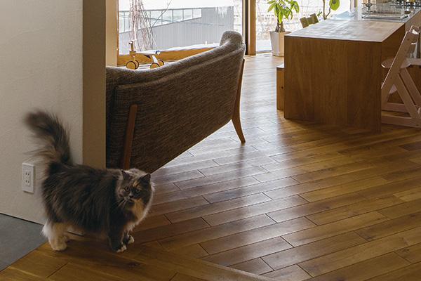 猫やフェレットも一緒に心地よく暮らす家