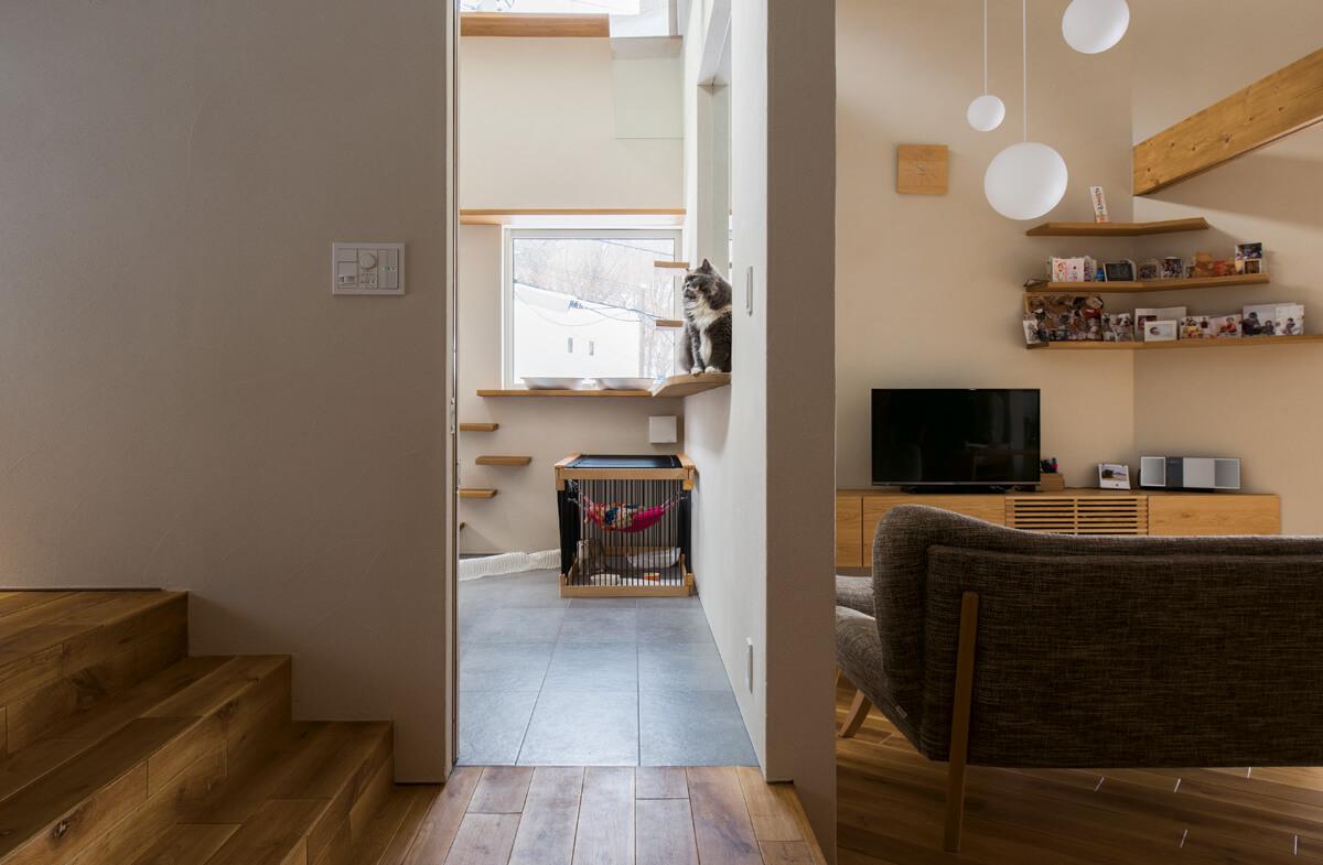 フェレットは床、猫はキャットウォークや窓辺などの高い場所。一つの空間でも、それぞれの生態に合わせて棲み分けられるよう設えられている