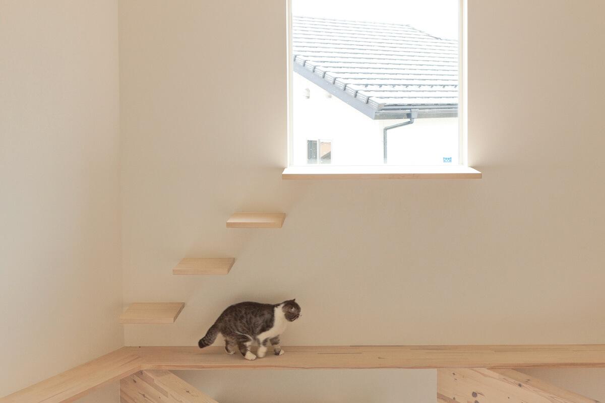 2匹の愛猫のためのキャットウォーク。ハイサイドライトまでステップを設けた