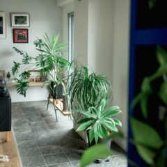家が狭くても、工夫次第で楽しめる!庭・インテリアグリーンのあ…