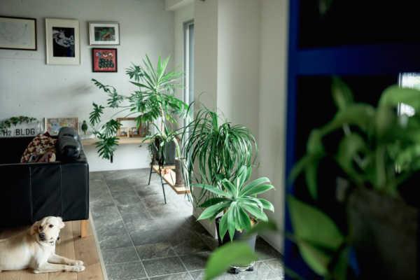 家が狭くても、工夫次第で楽しめる!庭・インテリアグリーンのある暮らし
