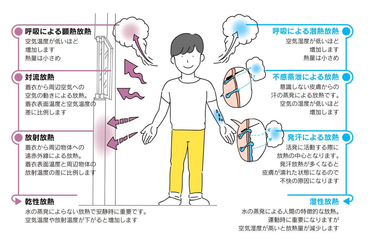 <strong>図5</strong> 体からの放熱は、放射・対流による「乾性放熱」と、汗の蒸発による「湿性放熱」に大きく分けられます。湿性放熱には、皮膚が汗で濡れないので気づきにくい「不感蒸泄」と、皮膚が汗に濡れるので不快に感じがちな「発汗」に分けられます。