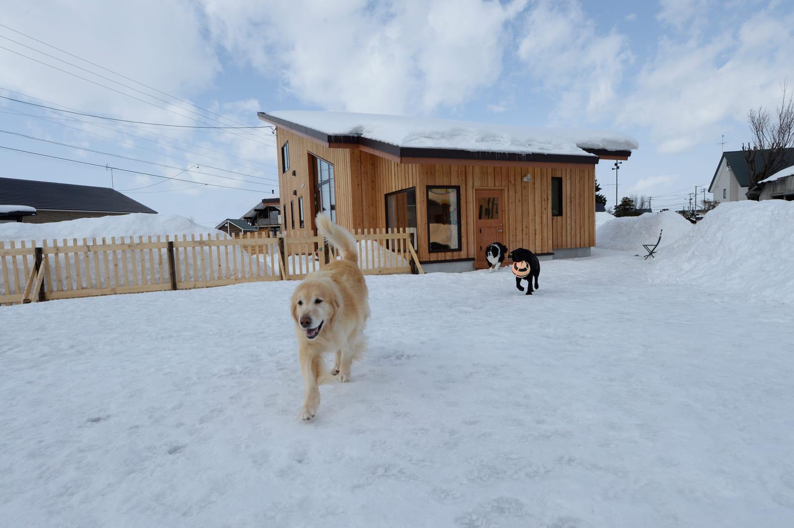 3頭の犬たちが元気に走り回れる広いドッグランのある庭