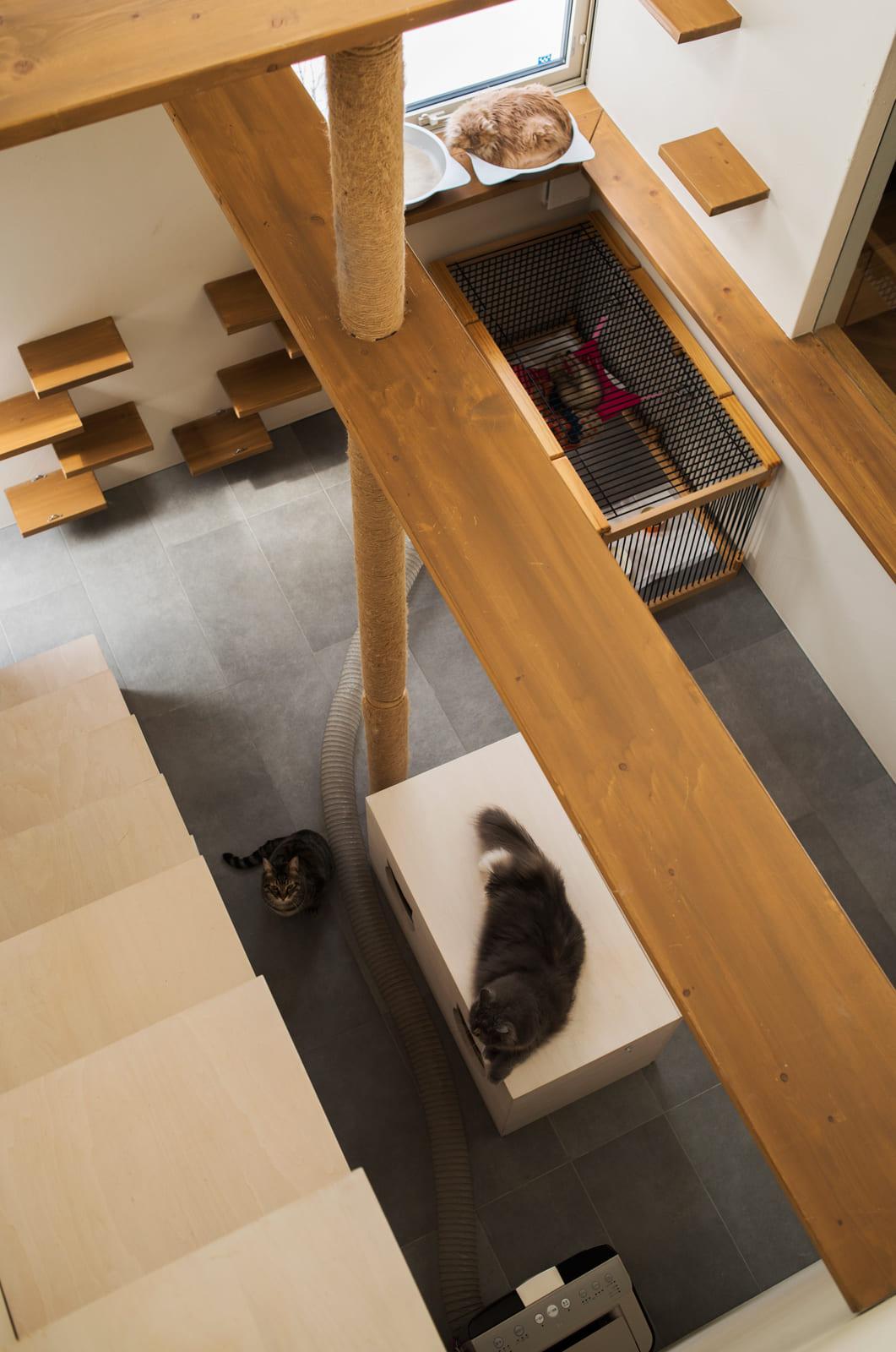 猫の部屋には、麻紐を巻いた爪とぎ柱と多種多様なキャットウォーク、観察窓と物見台、主寝室への階段と寝床を兼ねた収納などを造作。猫型の穴が開いた台の中には、トイレを収納。フェレットも床で一緒に暮らしている