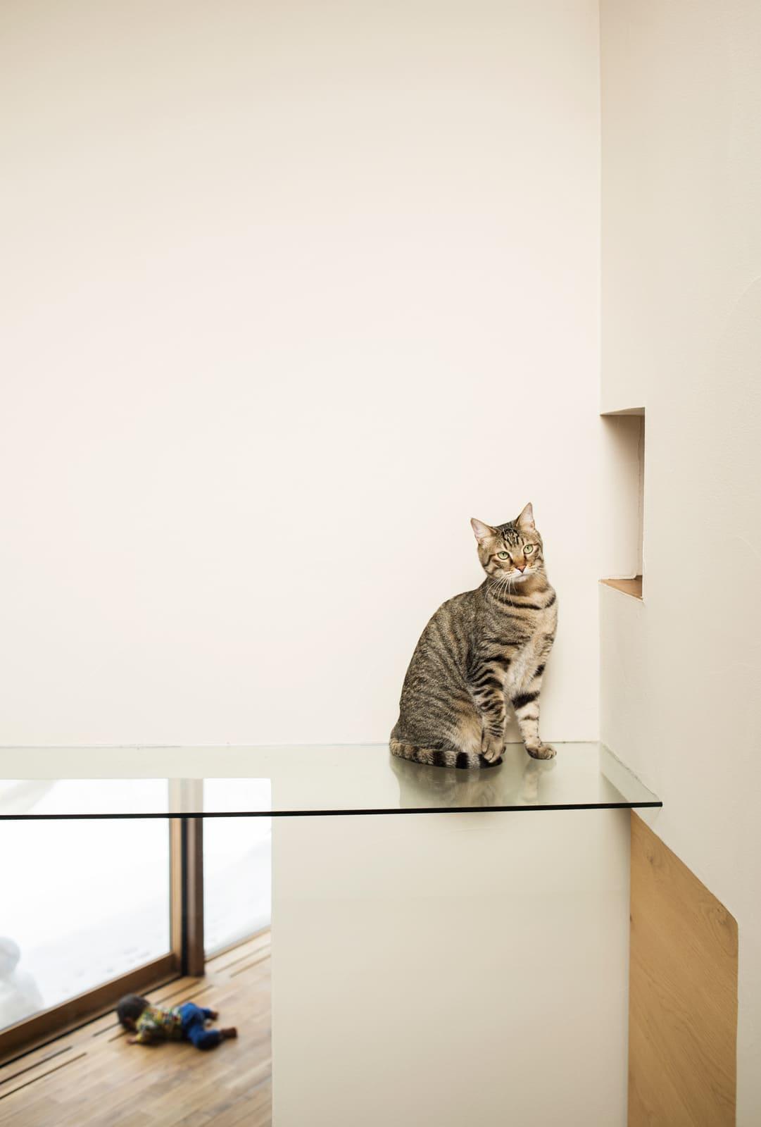 猫裏観察が楽しめるガラスのキャットウォーク。小さな出入り口は主寝室につながっている