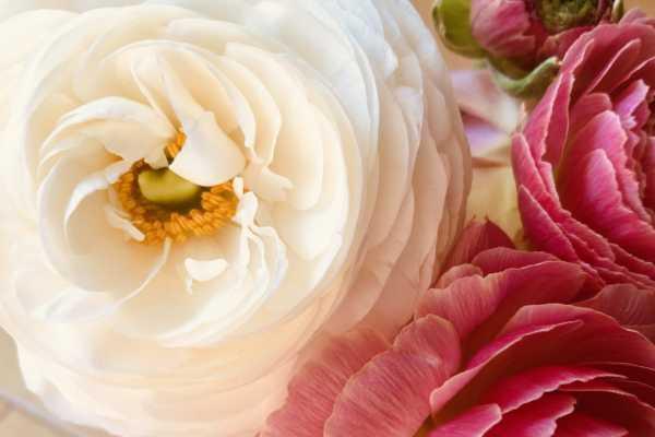 気になる!お花のサブスク
