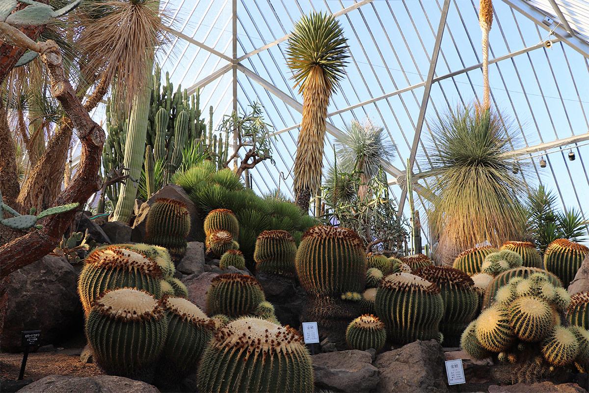 ピラミッドの中は温室になっていて、様々なサボテンが植えられている