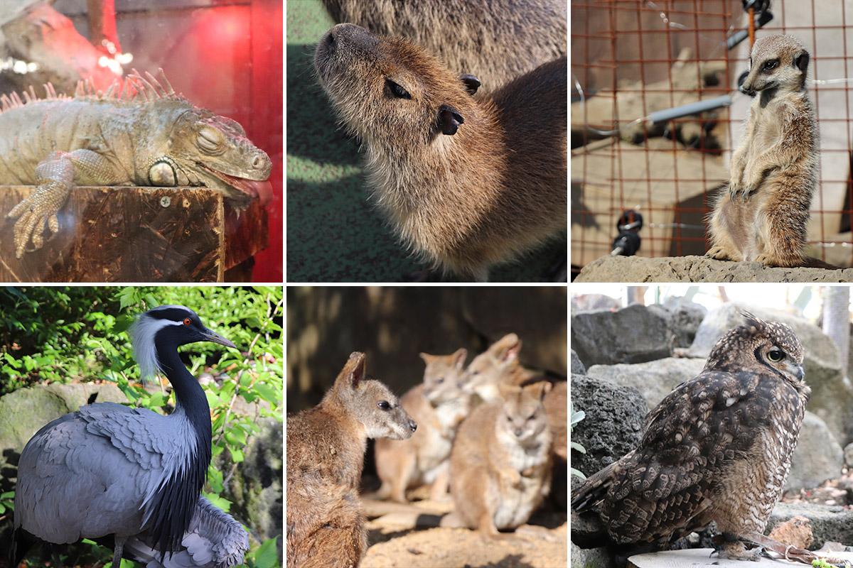 10や20では収まらないほど、動物観察してきました。お気に入りは左上の舌を出して寝ているイグアナ