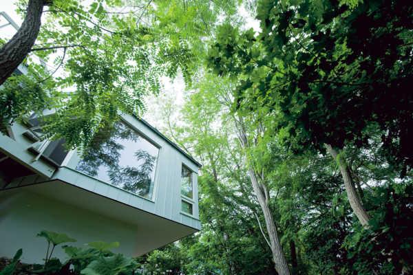 木々とともに暮らす 緑に浮かぶリビング