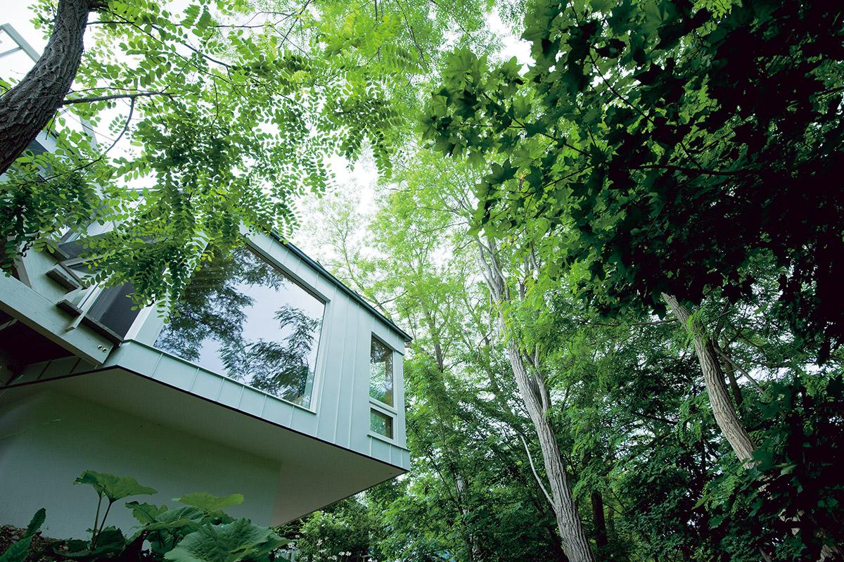 浮かぶようなリビングは、まるで緑に埋もれているかのよう。夏にはこの木々の葉が強い陽射しを遮り、冬には落葉して室内の奥まで日光を取り込むことができる