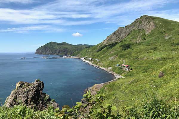 野生アザラシの礼文島