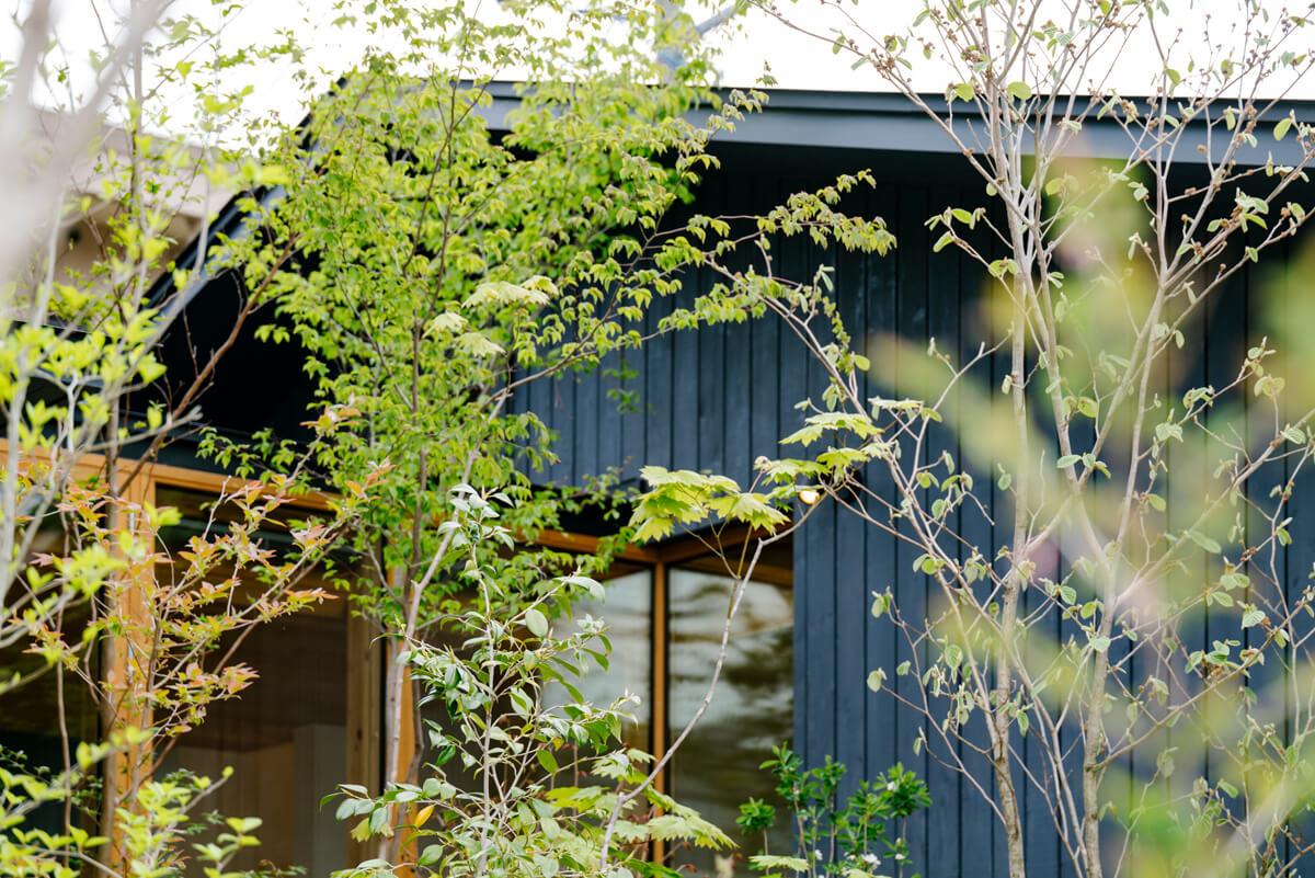 窓まわりの植栽が住空間と暮らしを彩る