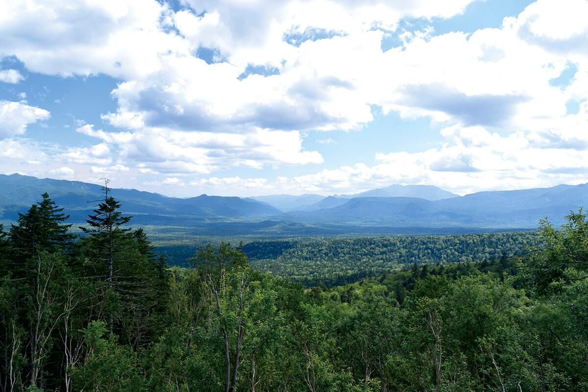 緑豊かな北海道の大地。総面積の約70%が森林で、その約30%が人の手により植林された人工林