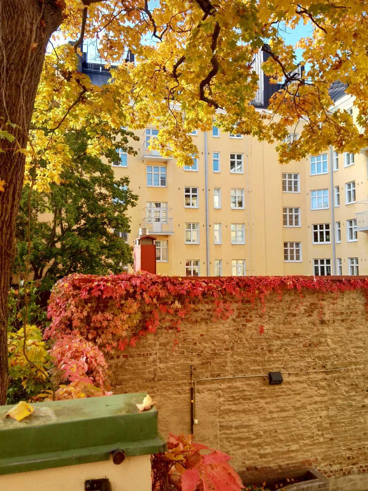 木の葉の黄色とレンガ壁をつたう葉の赤のコントラストが絶妙