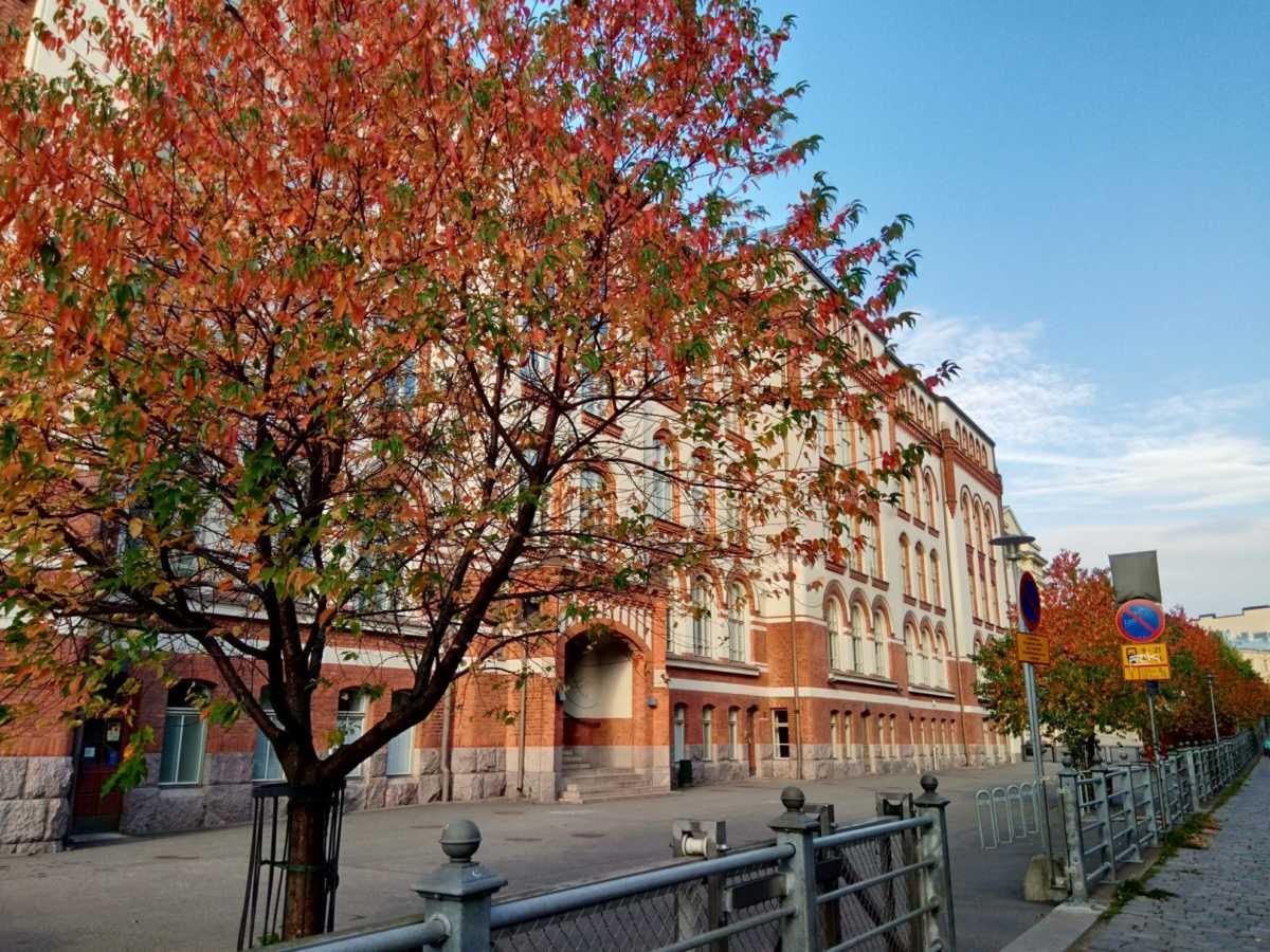 フィンランドでは赤になる紅葉は珍しい