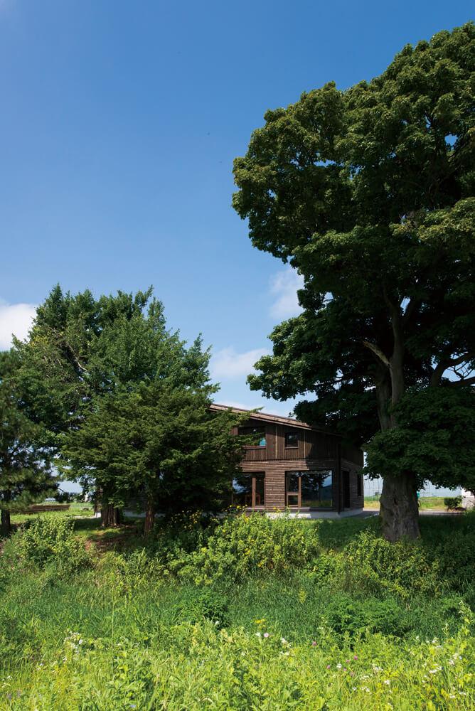 元々あった木を活かし、外壁も総板張りで風景に溶け込むような外観