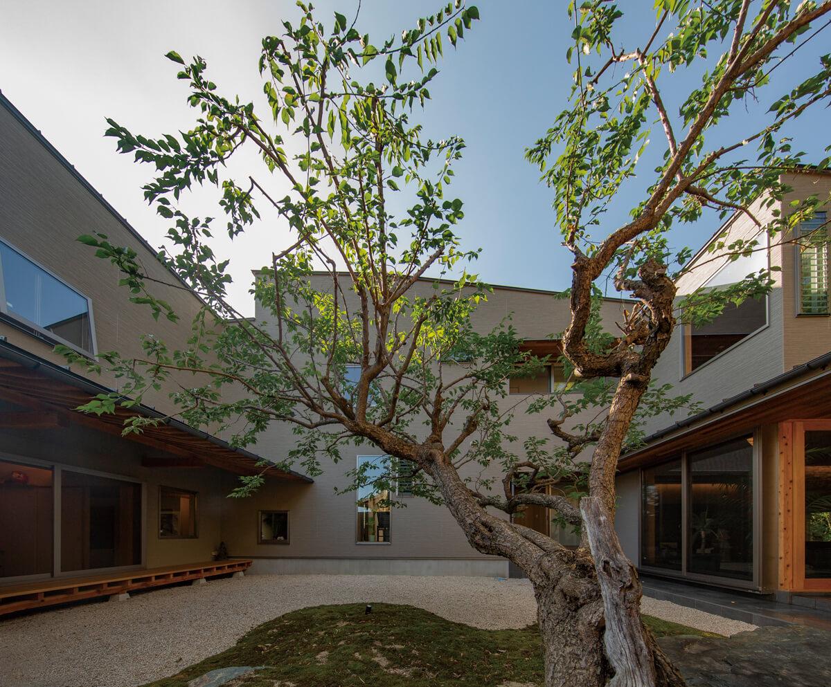 シンボルツリーの梅の木を囲むように建物を配置
