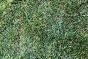 【庭DIY】「芝張り」初心者が、北海道は札幌で芝生を張ってみた
