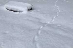 証拠ができたり消えたりする雪国のサスペンス
